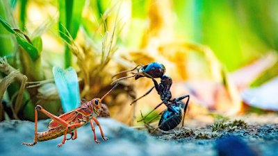 A short story of the Grasshopper and the Ant : Do your work on time