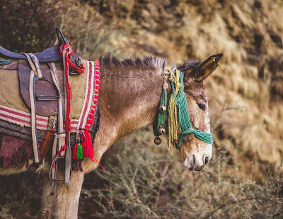 The salt seller and the foolish donkey : If you avoid your work it becomes a hill of work