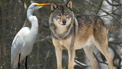 The story of the cunning wolf and the greedy crane : Don't believed in the wrong person.