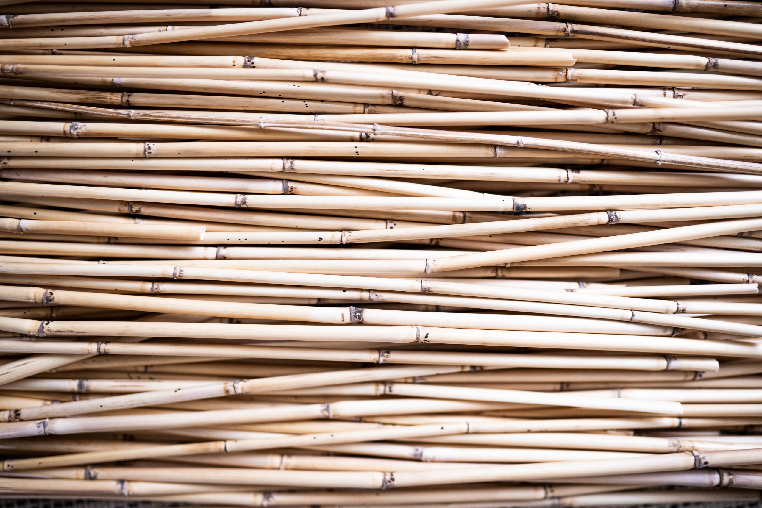 The bundle of the stick : Unity is a strength